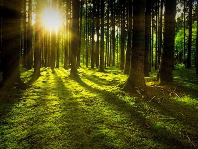 Giornata mondiale delle foreste - vacanze nei boschi