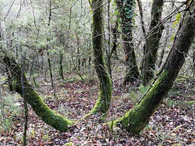 fondo forestale italiano