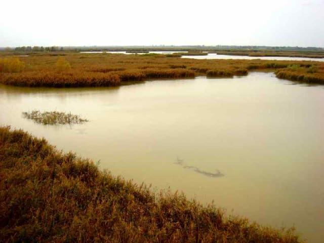 wetlands agricoltura hi-tech