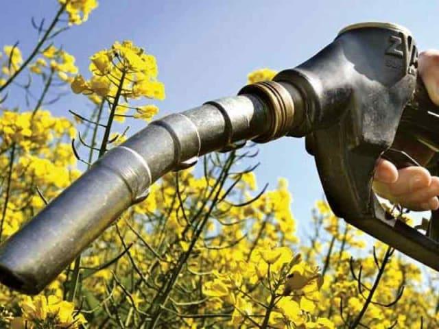 progetto EXCornsEED biocombustibili