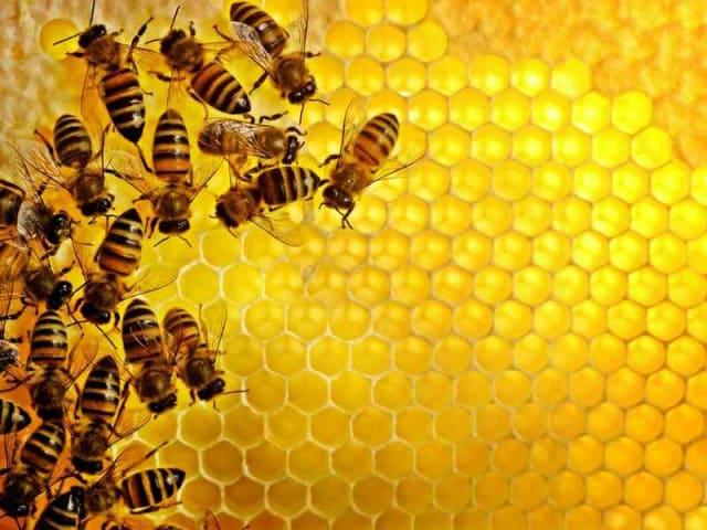 api al lavoro
