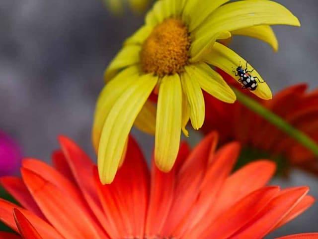carta di metz biodiversità