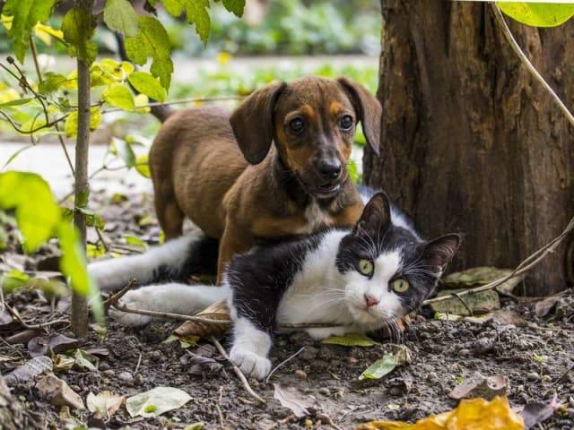 animali di affezione