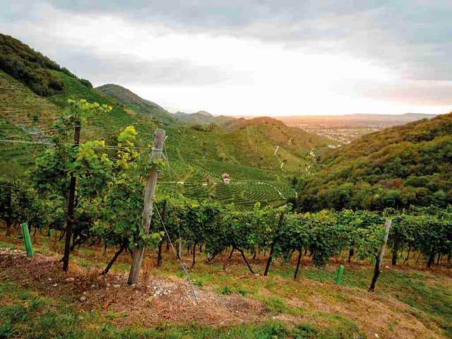 cantina produttori di Valdobbiadene
