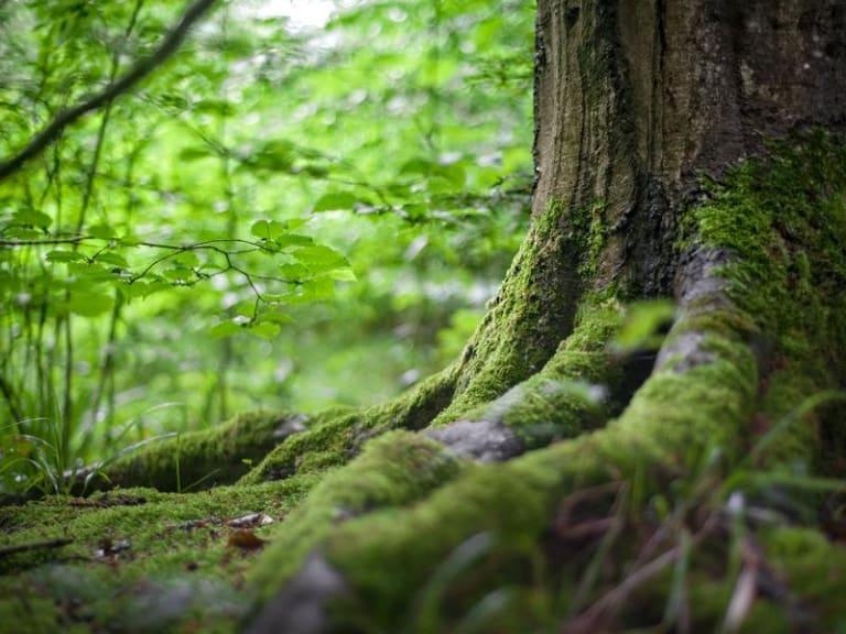 Mitigazione della crisi climatica: piantiamo più alberi