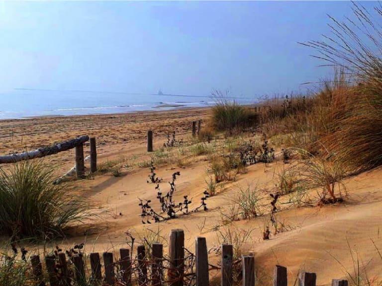 Anche le dune soffrono, ecco con quali piante salvarle
