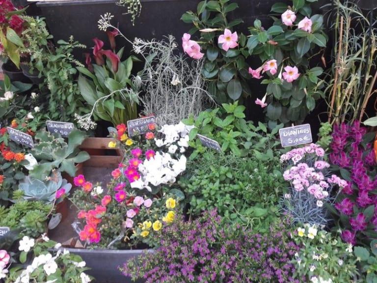 Fiori e piante: urgono misure istantanee per sostenere gli imprenditori