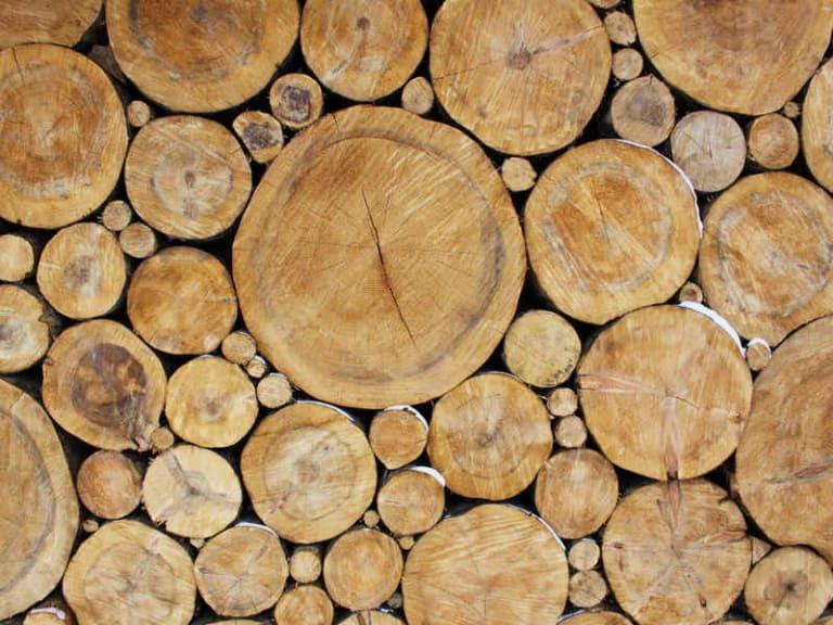 Quel buon legno che viene dalle città