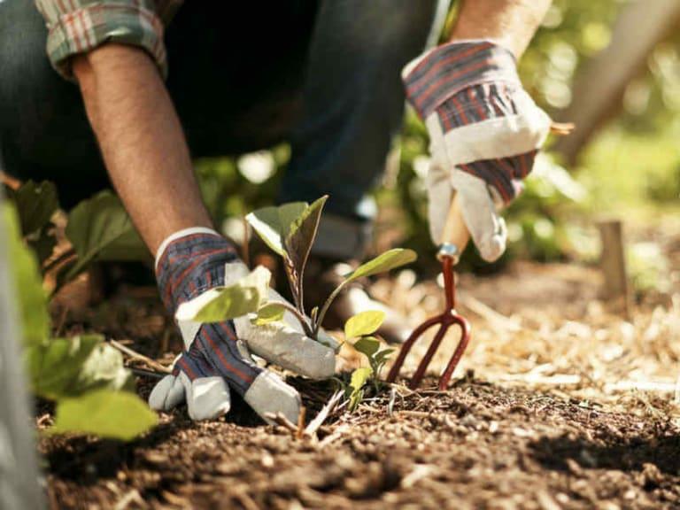 Un corso gratuito per imparare a curare il verde