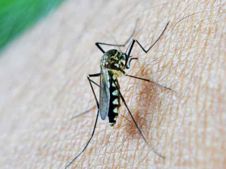 Quali sono le piante giuste per tenere lontane le zanzare