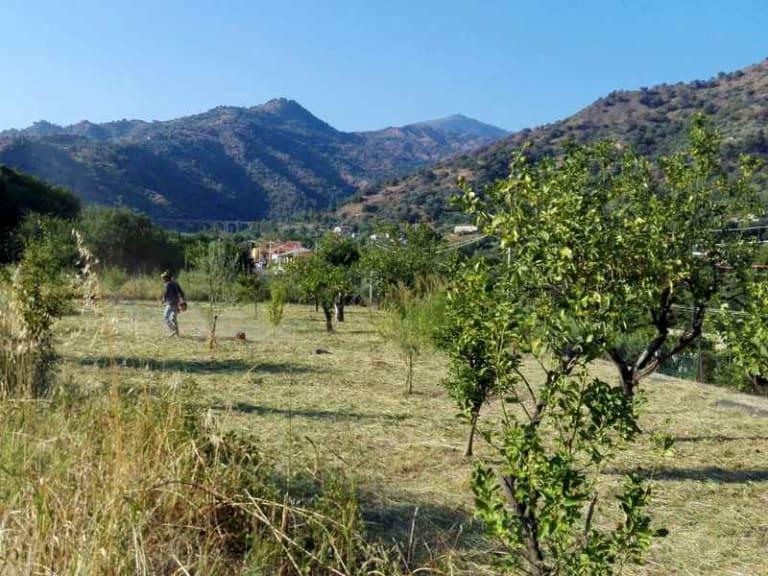 In Sicilia cresce la foresta di Credem