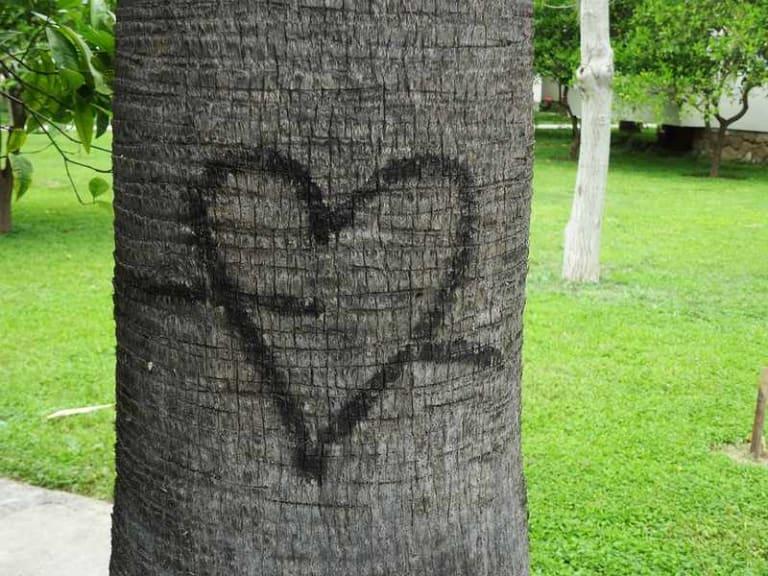 San Valentino, regala un albero a chi ami