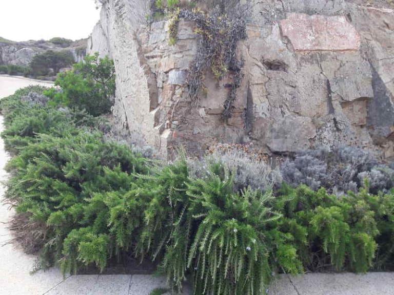 Esperienze di verde in carcere: apre anche il giardino a San Vittore