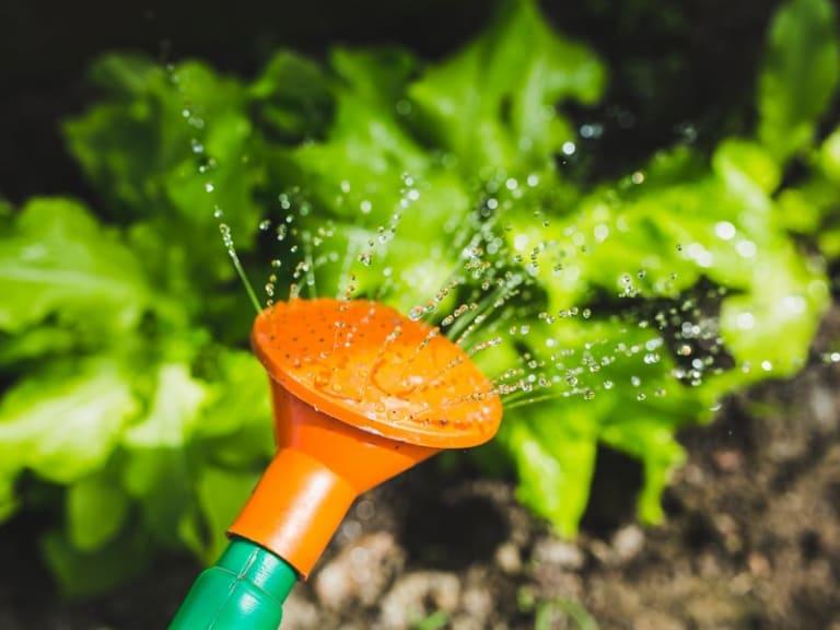 Manutenzione del verde casalingo: è tempo di arieggiare
