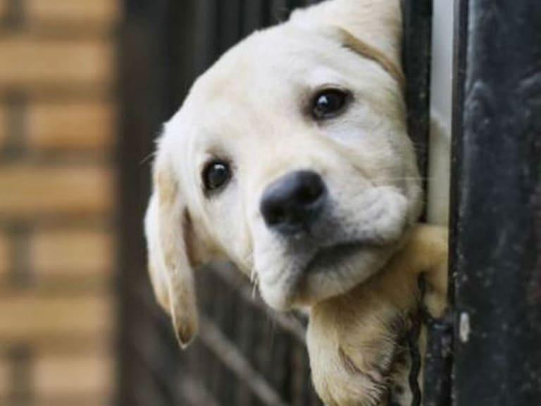Le associazioni animaliste chiedono un rapporto più sano con animali e natura