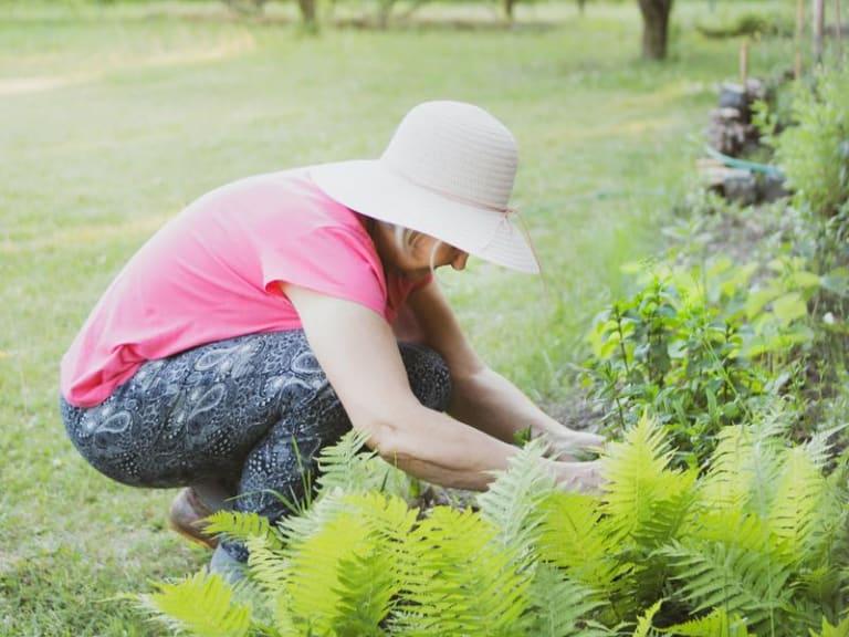 Ripartiamo in sicurezza evitando problemi in giardino