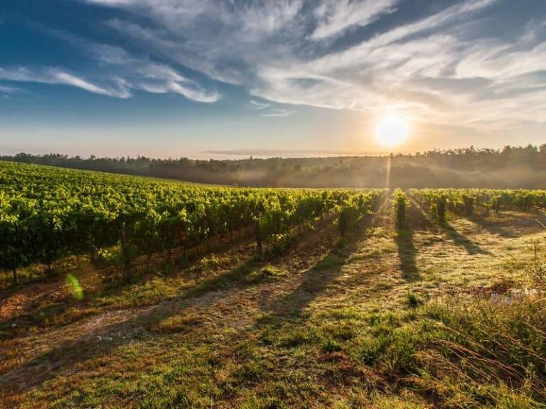 Come calcolare la CO2 del settore vitivinicolo