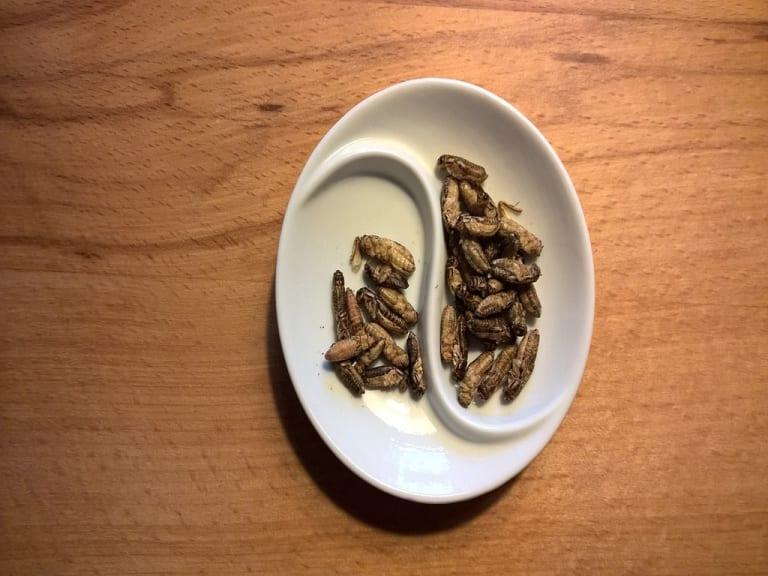 Insetti edibili, qualcosa nel piatto si sta muovendo