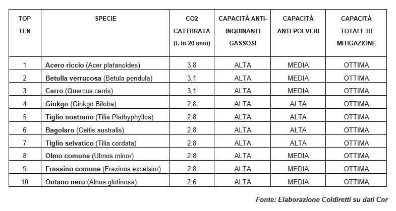 misure antinquinamento - piante assorbi emissioni