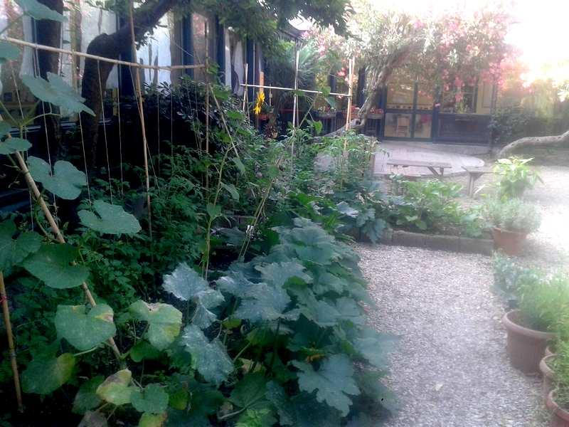 coltivazione ortica - macerato di ortica