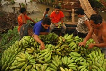 food trade