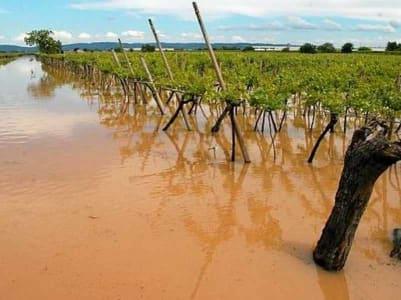 danni all'agricoltura