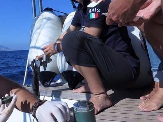 nuovi velisti - progetto mediterranea