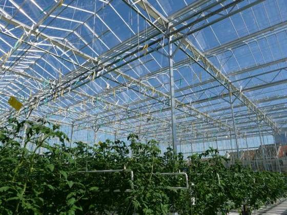 coltivazione acquaponica
