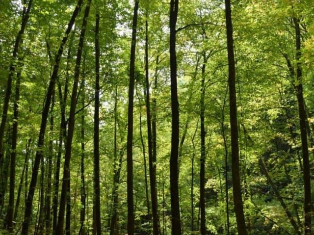 foreste in italia - registro crediti di carbonio