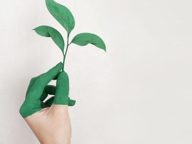wso certificazione sostenibilità
