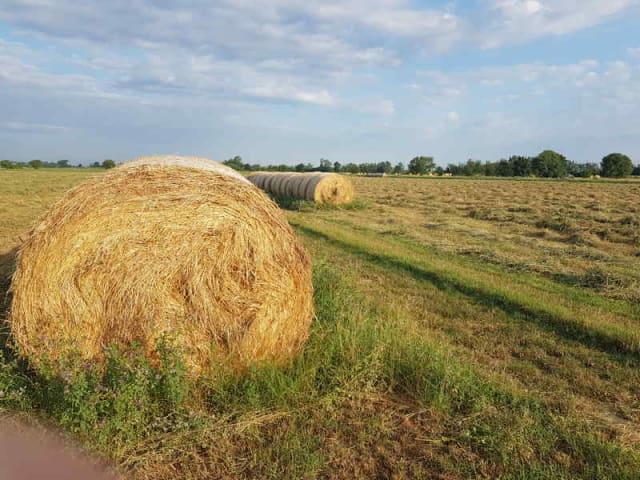 bandi di sostegno all'agricoltura