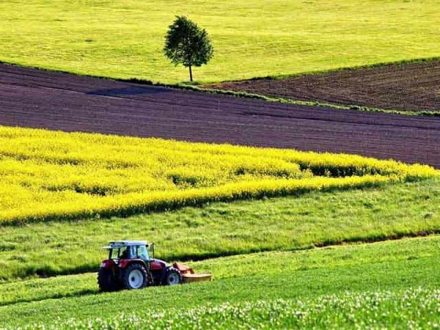 cibo e sostenibilità