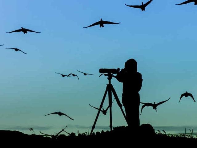 guardami birdwatching