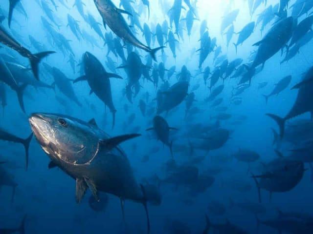 pesca insostenibile