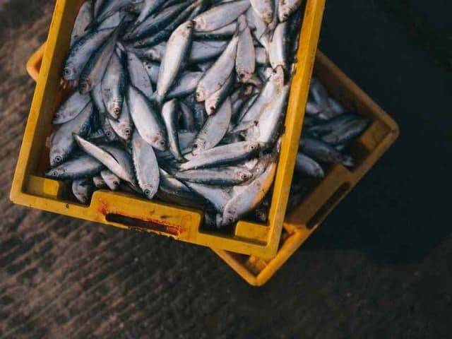 allarme pesca in adriatico