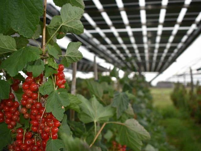 fotovoltaico biodiversità agricoltura