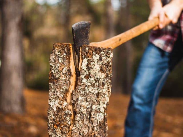 vivere e lavorare nei boschi