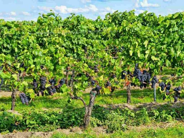 vini biologici alto adige