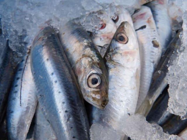 pesce blu - economia circolare