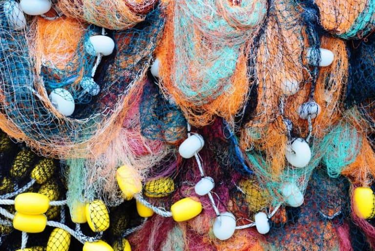Pesca sostenibile: Findus e MSC insieme per il futuro degli oceani