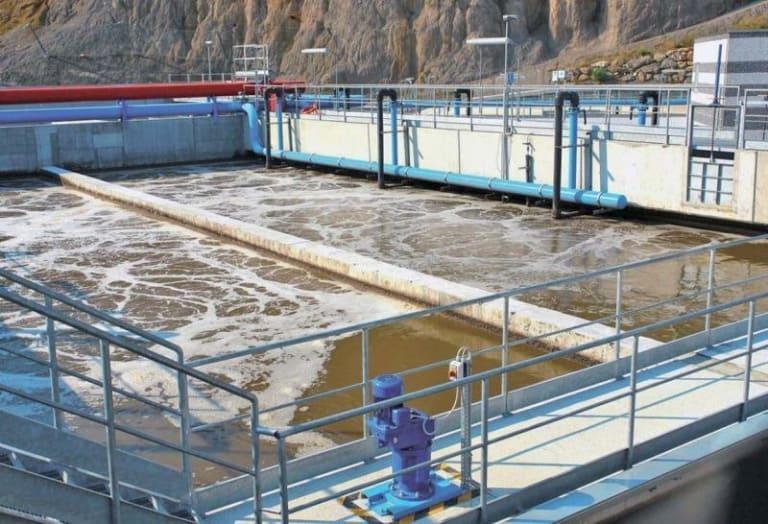 Salici e cannucce di palude per ripulire le acque reflue