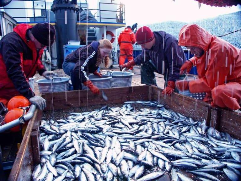 È il momento buono per ricostituire gli stock ittici