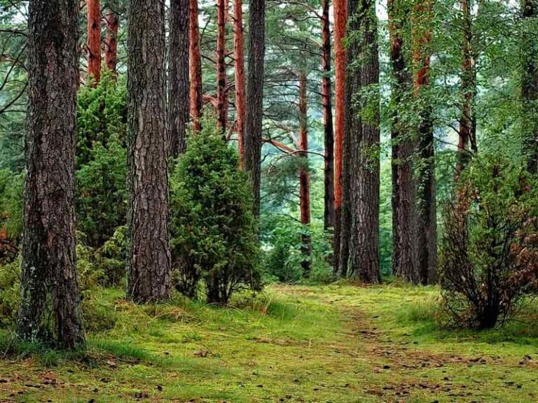 """Le """"foreste"""" entrano in classe: nuovo percorso curriculare"""