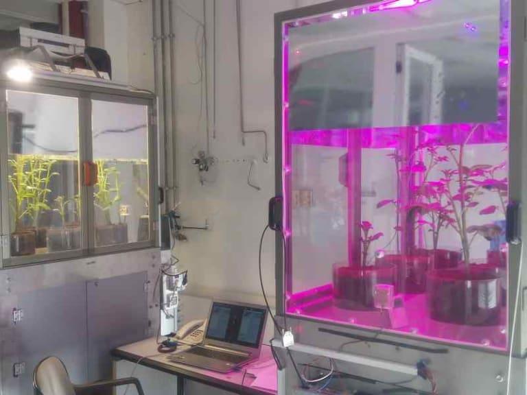 Serra hi-tech: l'Enea studia le piante del futuro