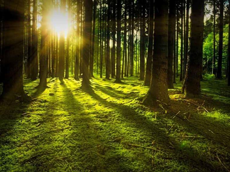 21 marzo, torna la giornata mondiale delle foreste: le manifestazioni a essa correlata