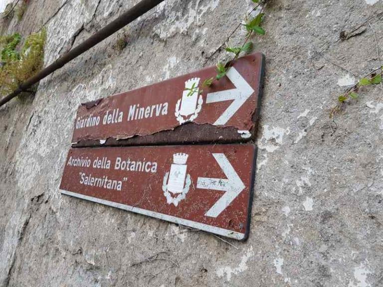 Il primo orto botanico è a Salerno. È il Giardino della Minerva