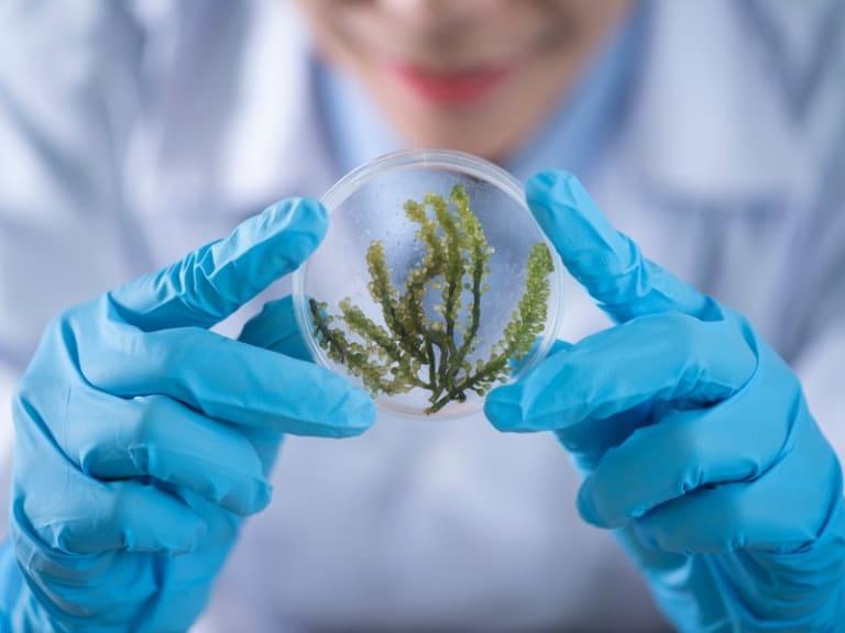 Biotech Camp On Air: ecco perché conviene studiare le biotecnologie