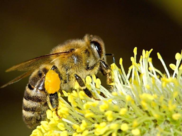 Giornata mondiale delle api: chi sono i paladini della biodiversità