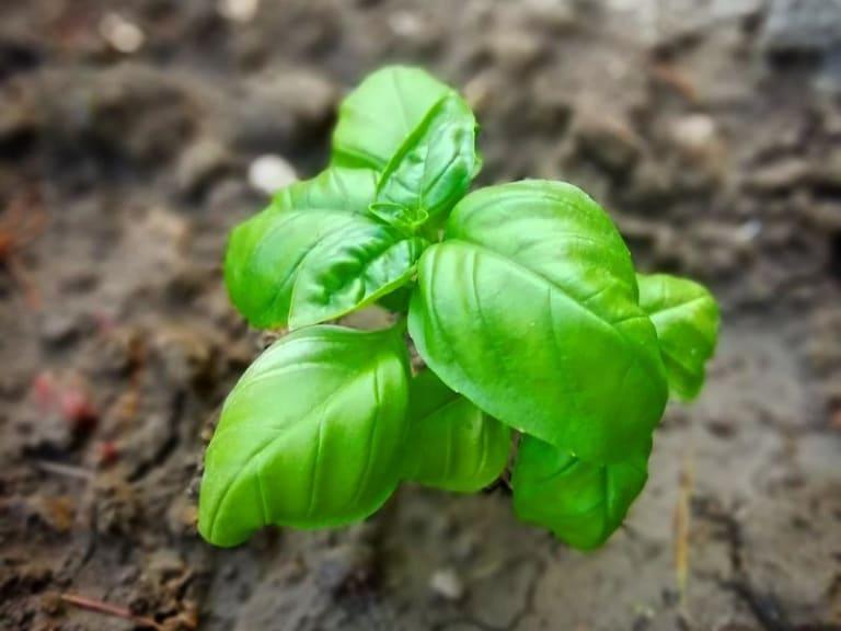 Mi diverto facendo l'orto: il nuovo passatempo dei giovani