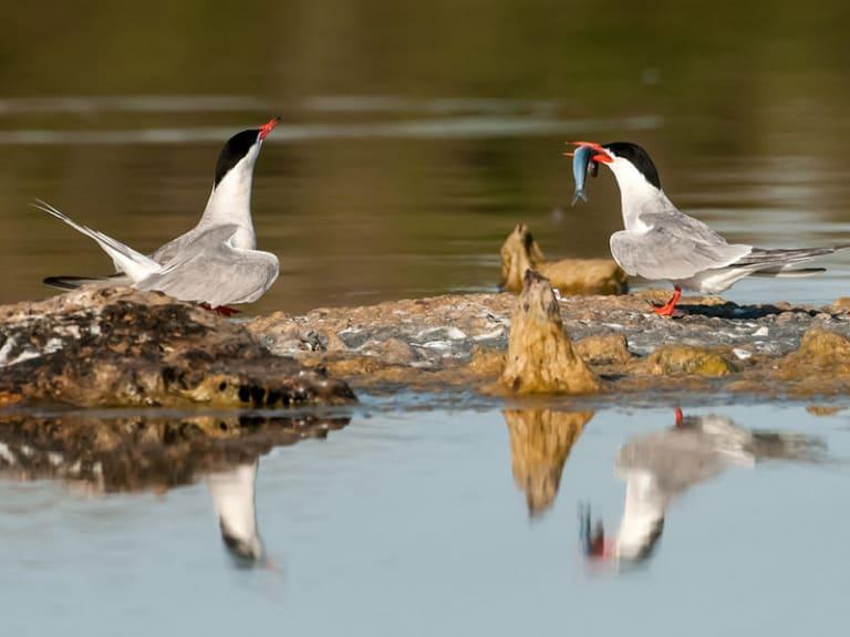 Isolotti ecologici per la fauna avicola